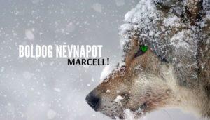 Marcell név üdvözlő borító