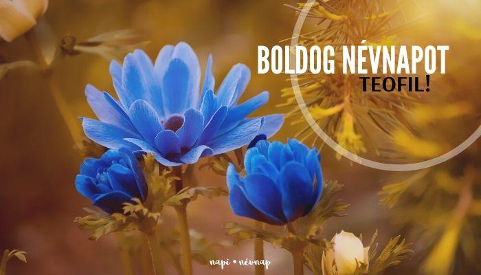 Teofil név üdvözlő borító